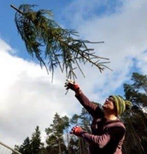 throw tree pic